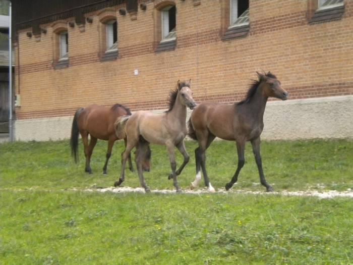 pferdefreunde_lausen_my_nchen_2011_043