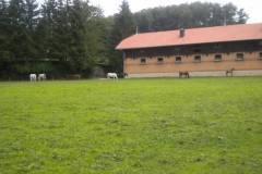 pferdefreunde_lausen_my_nchen_2011_039