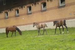 pferdefreunde_lausen_my_nchen_2011_040