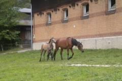 pferdefreunde_lausen_my_nchen_2011_042