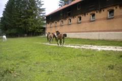 pferdefreunde_lausen_my_nchen_2011_044