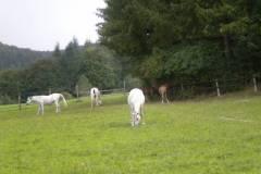 pferdefreunde_lausen_my_nchen_2011_045