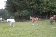 pferdefreunde_lausen_my_nchen_2011_046