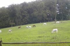 pferdefreunde_lausen_my_nchen_2011_047