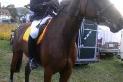 pferdefreunde_lausen_my_nchen_2011_073