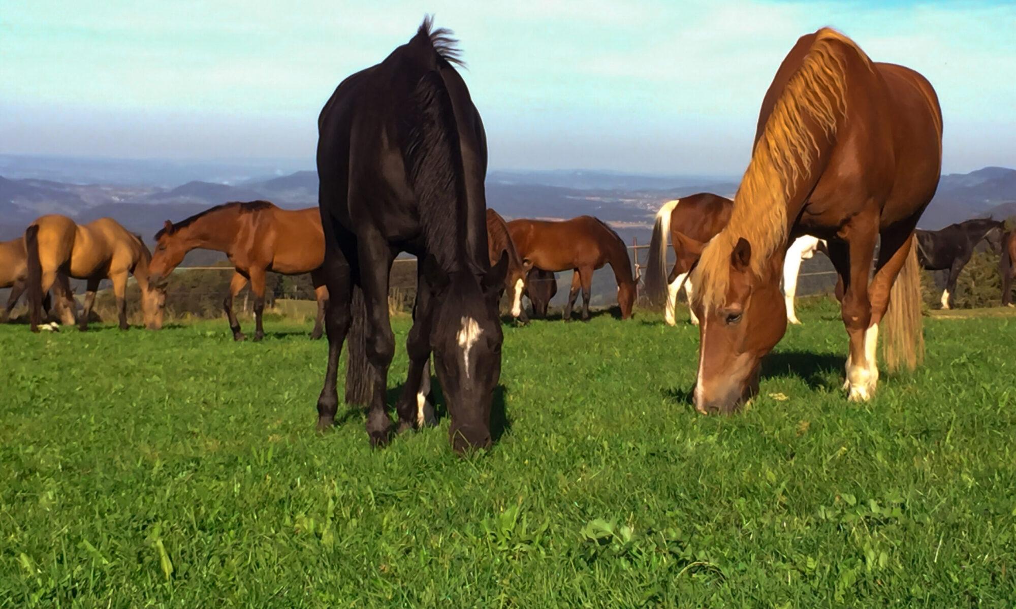 Pferdefreunde Lausen